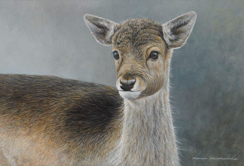 Wildlife Greetings Cards by Artist Richard Whittlestone (Pretty Baby)