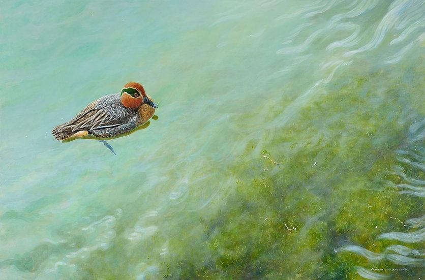 Teal on Bright Water Bird Painting by Wildlife Artist Richard Whittlestone