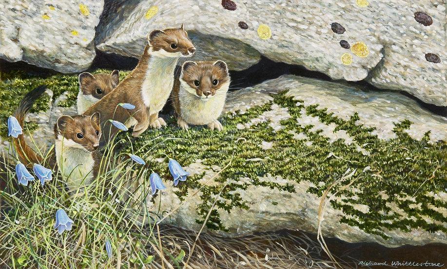 We Are Family Print by Wildlife Artist Richard Whittlestone