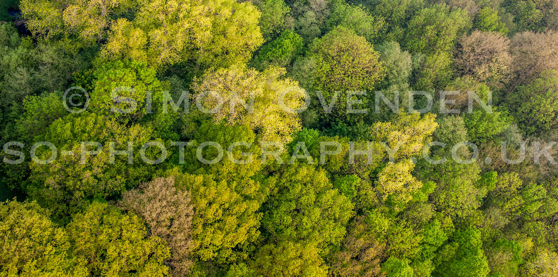 Above the Canopy