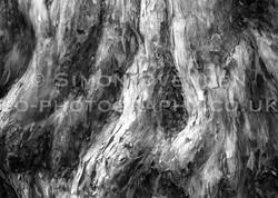 Yew Bark