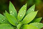 Feuillage plante intérieure