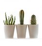 plantes 4