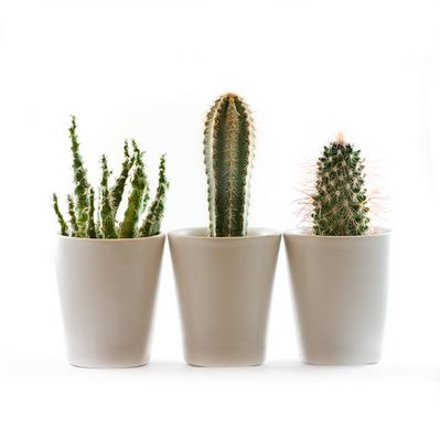 Plants 4