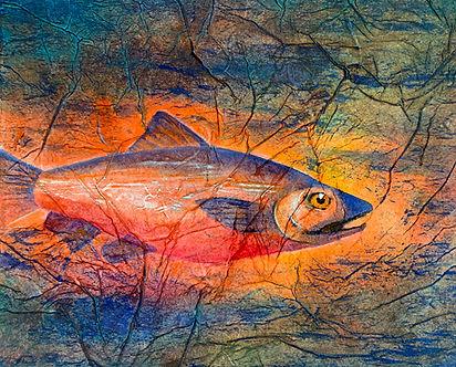 Salmon Swim md.jpg