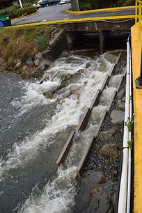 Completed fish ladder project - Nov. 2,