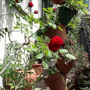 Ideen fürs Gärtnern auf wenig Raum