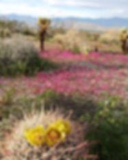 Desert bloom.jpg