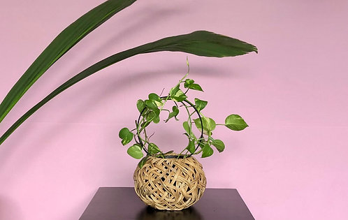 Tinali Orchid Natural Planter only