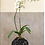 Thumbnail: Tinali Orchid Pot