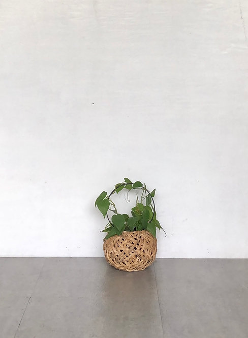 Tinali Orchid Natural Planter with Lovely