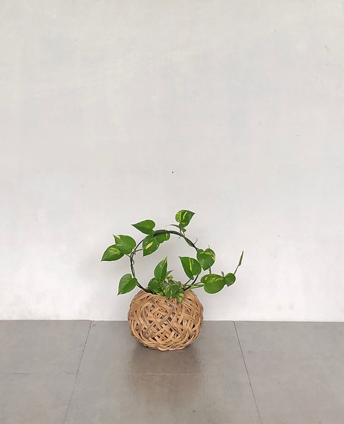 Tinali Orchid Natural Planter with Pixie