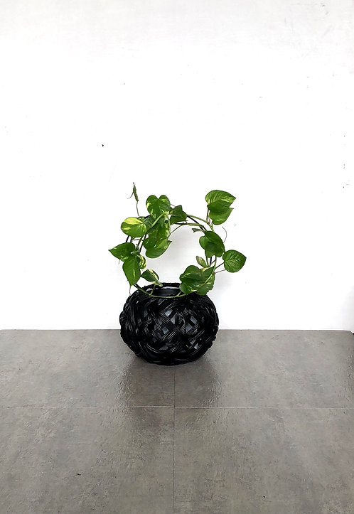 Tinali Orchid Black Planter with Evy