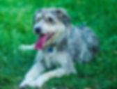 dogs-welcome_edited.jpg