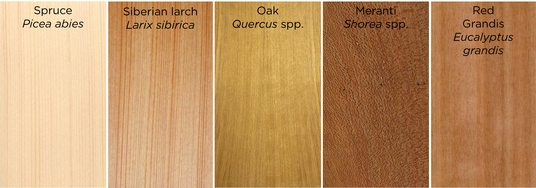 The Truth About The Origin Of Wood In Windows