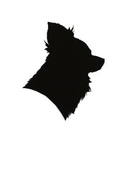 Pet Portrait, 2018