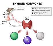 Thyroid1.jpg