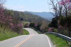 der Frühling kommt - Virginia