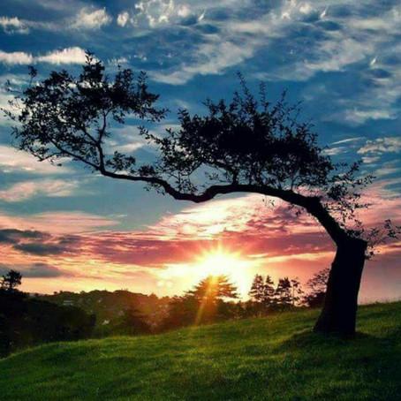 The Pragmatic Soul|  Hritwika Majumder
