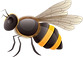 Bee1_png.png