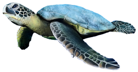 GN_seaturtle_png (2b).png