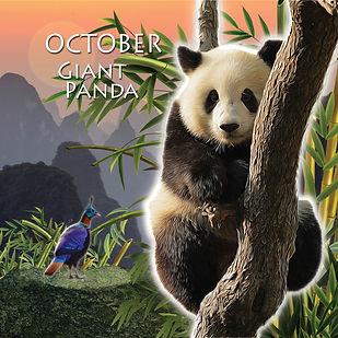 10_October_Giant Panda_jpg.jpg