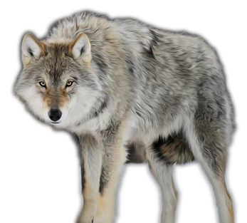 GN_wolf_png (2b).png