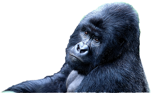 GN_Gorilla_png (2).png