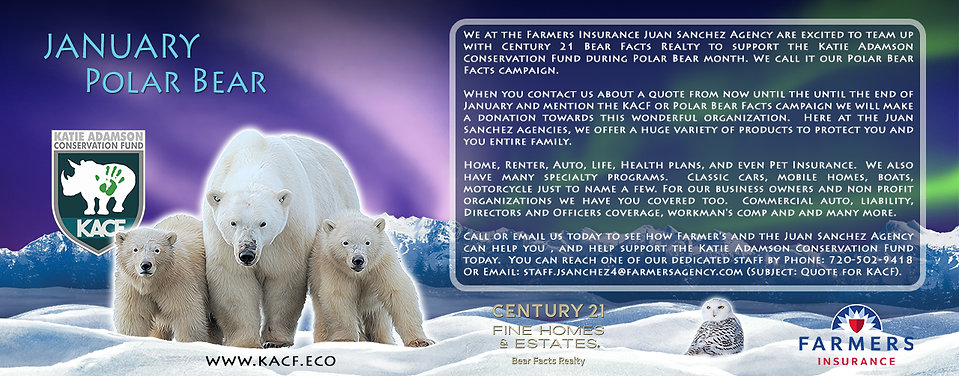 January_Polar Bear_Promo_jpg.jpg