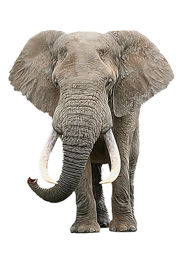 GN_elephantbull_800x_png (2).png