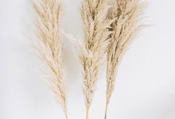 Dried Pampas Grass
