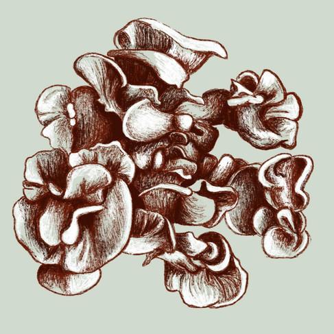 Fungus Study #1, 2019