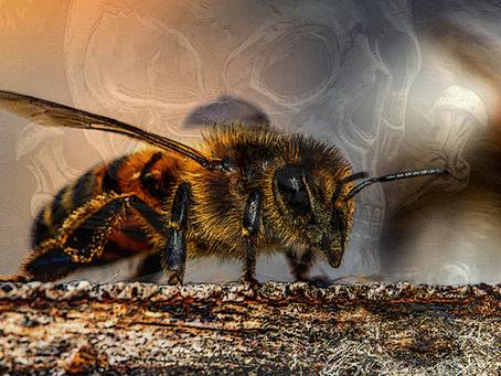 10 actions pour aider les pollinisateurs  à survivre!