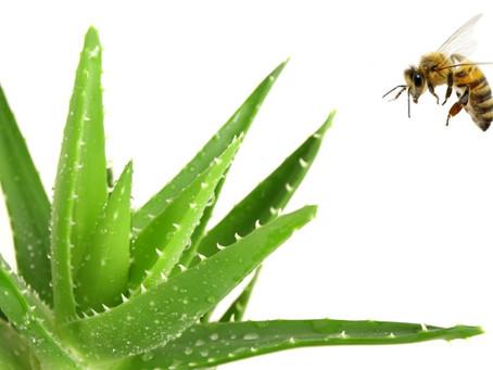 35 raisons de conserver du miel à la maison !
