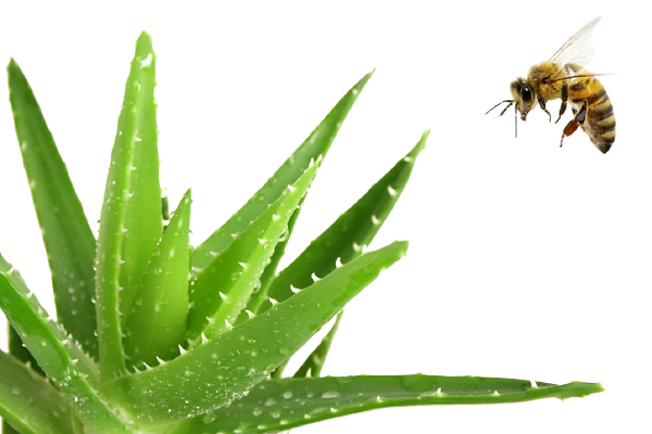 aloe_bee-removebg-preview (1).png