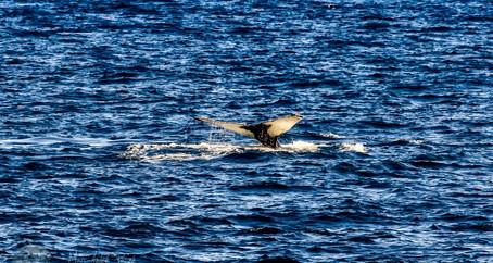 Baleines en vue