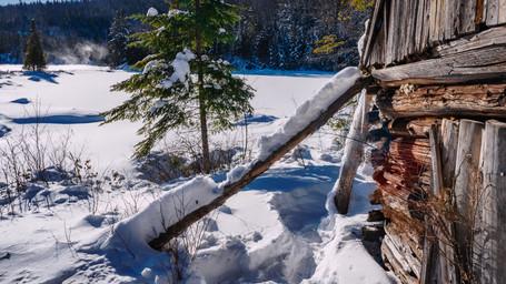 Visite au vieux camp de trappeur