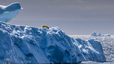 Où est la glace?