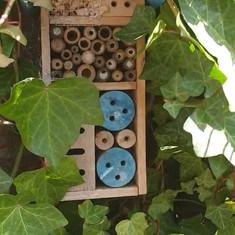 Biodiversiteit in eigen tuin
