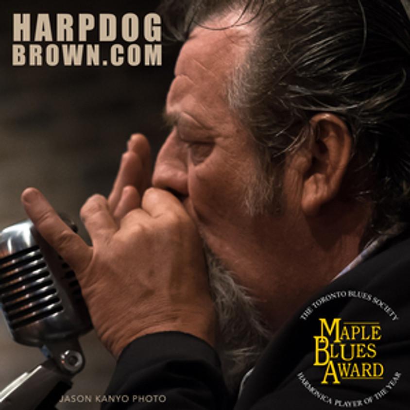 Harpdog Brown & The Uptown Blues Band! LIVE @ Wild Eye Pub!