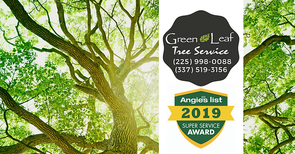 TREE SERVICES BATON ROUGE LA
