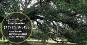 Louisiana Oak Tree Service