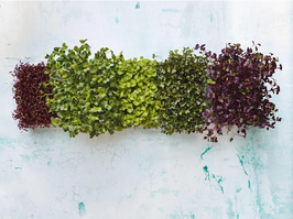 Vertical Farming Is A Space-Saving Way to Grow Fruits And Vegetables At Home - Here's How