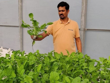 Want To Start A Hydroponics Business? Expert Shares 5 Tips To Ensure Success