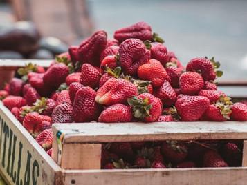 Hydroponic Strawberry Urban Farming