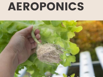 Hydroponics vs Aeroponics: Which One Is Right For You?