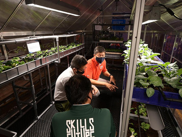 New Farming School To Develop Talent In Singapore's Agri-Tech Sector