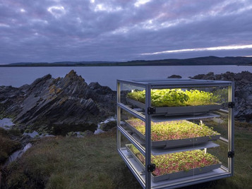 Vertical Farms To Take Shape Across Scotland Under Plans To Stage Hundreds Of Harvest Festivals