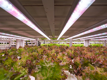 NIP Boosts Local Food Production By Offering Vital Facilities For Hydroponics Vertical Farming