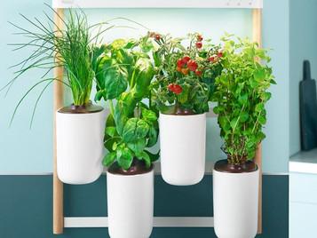 Prêt à Pousser Brings sustainable & Compact Indoor Kitchen Gardens To Dubai